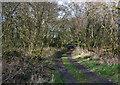 SJ6147 : Track through scrubland at Sound Heath by Espresso Addict