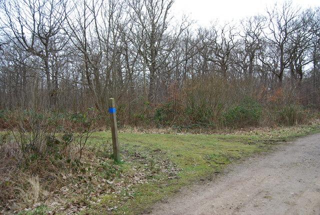 Footpath, Bridleway junction, North Bishopden Wood