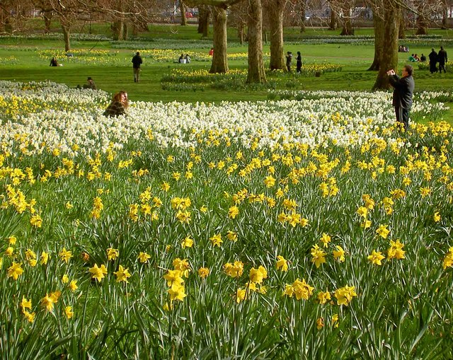 Yellow in Green Park