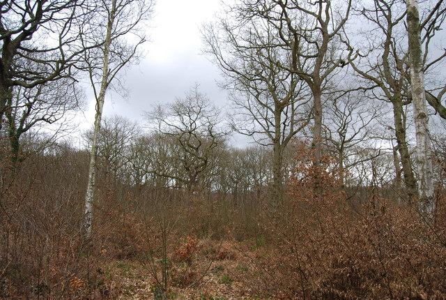 Mixed woodland, North Bishopden Wood