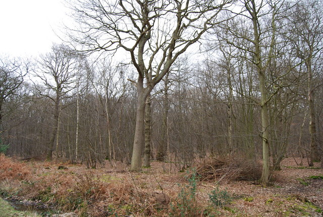 North Bishopden Wood