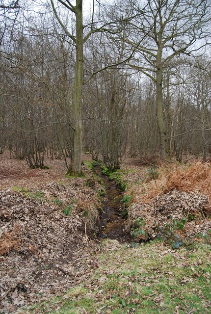 Small stream, North Bishopden Wood