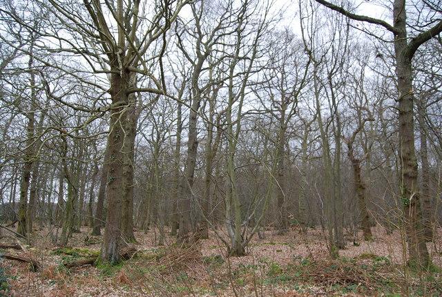 Mixed Oak Woodland, North Bishopden Wood