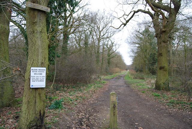 Track into Blean Wood Nature Reserve