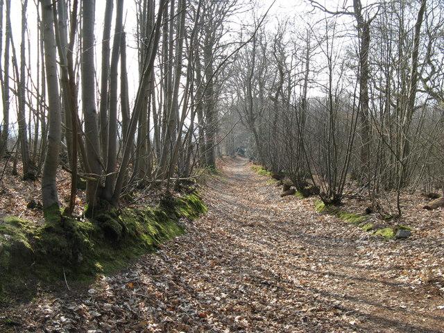 Bridleway in Fittleworth Wood
