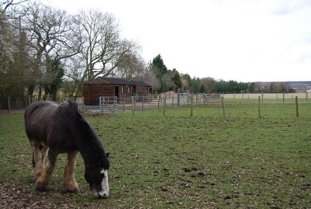 Horse in a paddock, Denstroude Lane