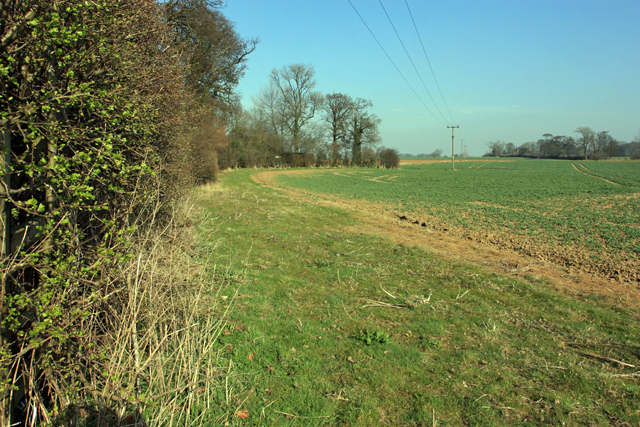 Set Aside strip near Wood Hall, New Ellerby
