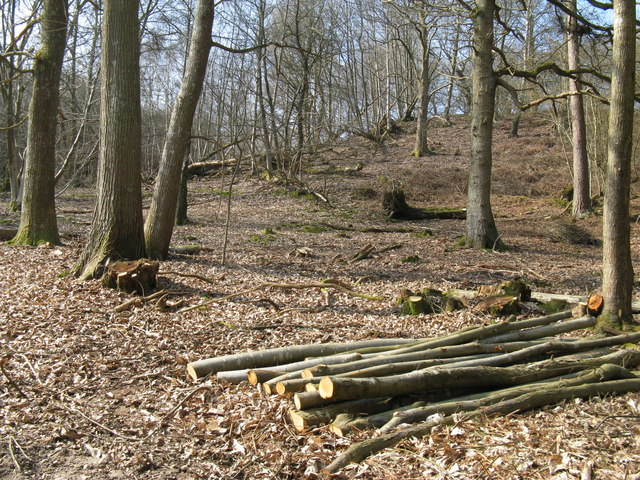 Coppicing in Fittleworth Wood