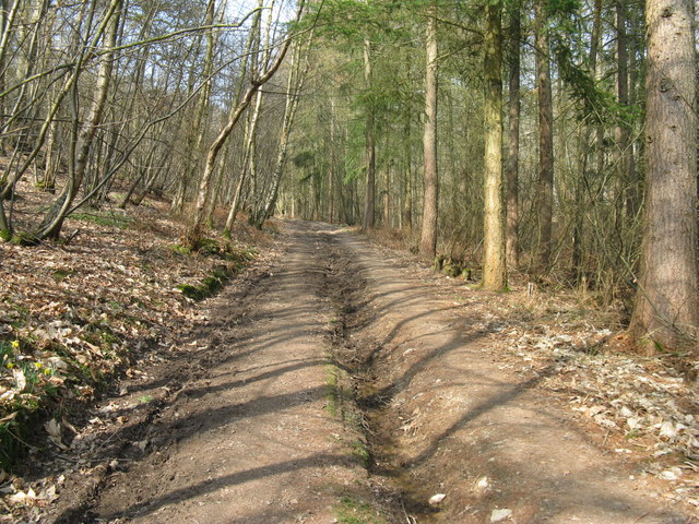 Footpath in Chance Copse