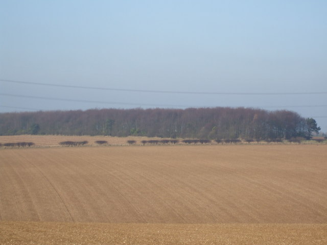 Newbald Plantation