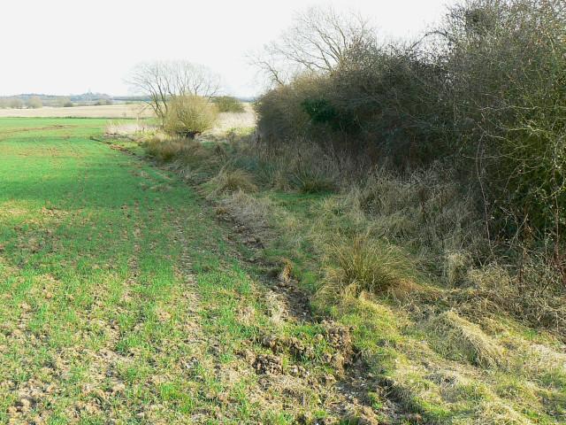 Field margin, south of Whitehill Lane, Grittenham