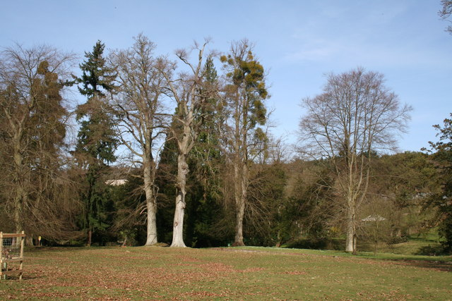 Trees in Albury Park, Surrey