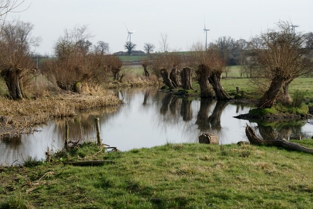 Pollarded willows by the River Cole
