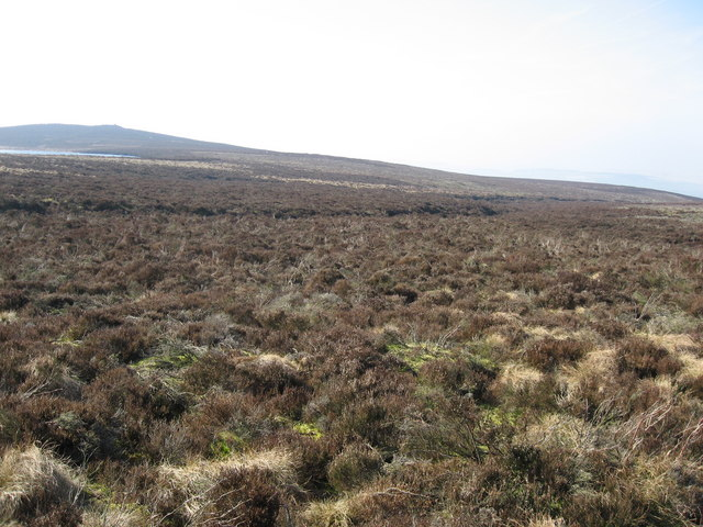 Moorland near High Rigg