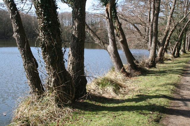 Cuttmill Pond, Puttenham Common, Surrey