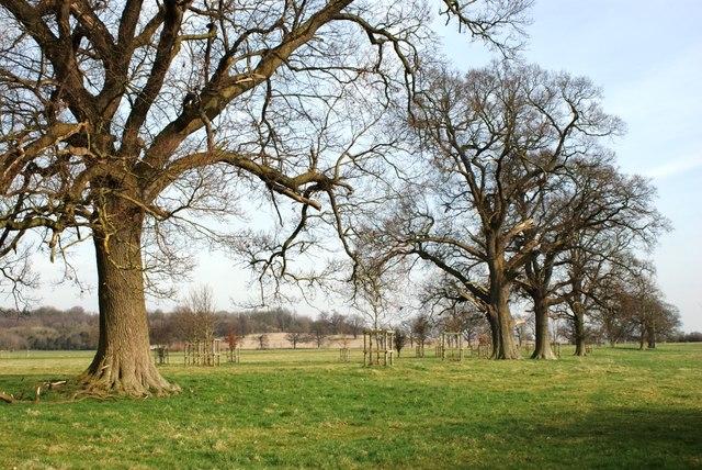 Coleshill Park