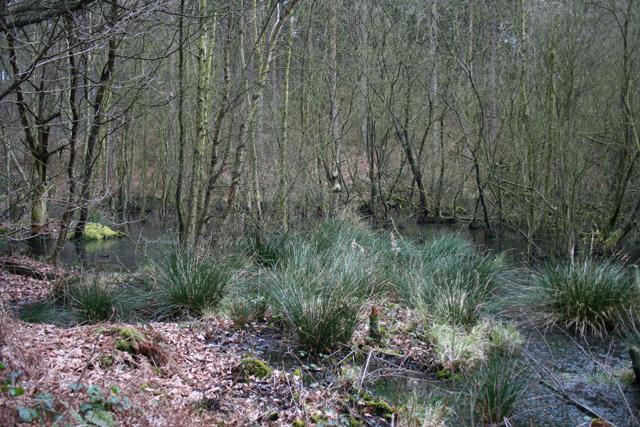 Marshland near Hunger Hill