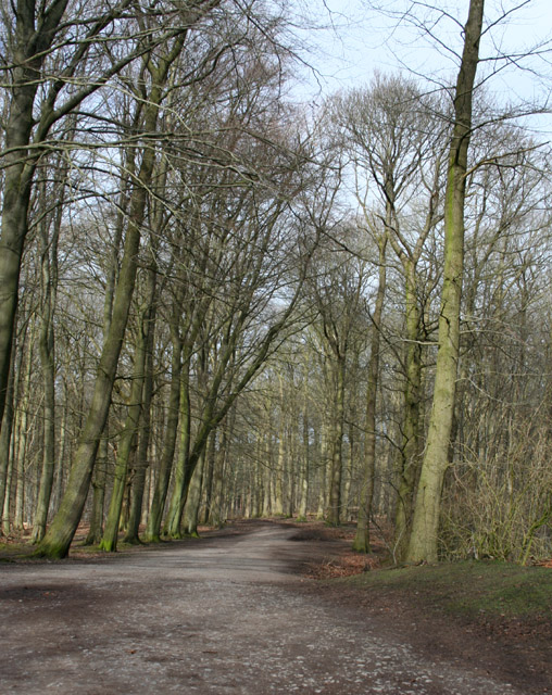 Spring sun on the Sandstone Trail