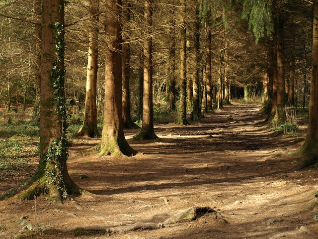 Path through the conifers, Parke