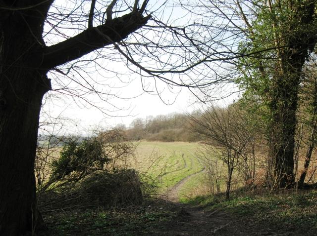 The Bridleway from Northfield Grange, Aldbury