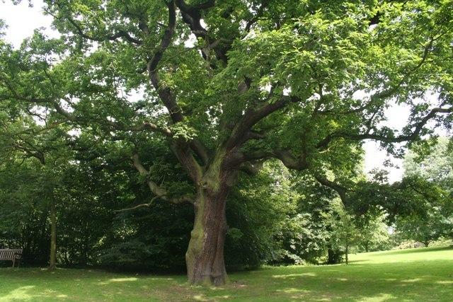 Beautiful Oak tree at Yorkshire Sculpture Park
