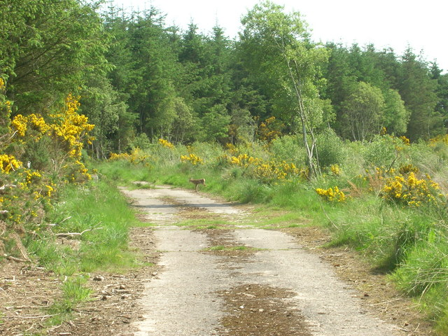 Forest Path, Boyndie