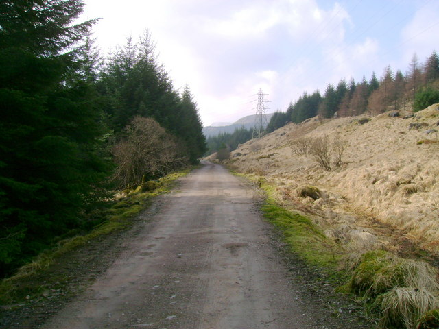 Track through forestry