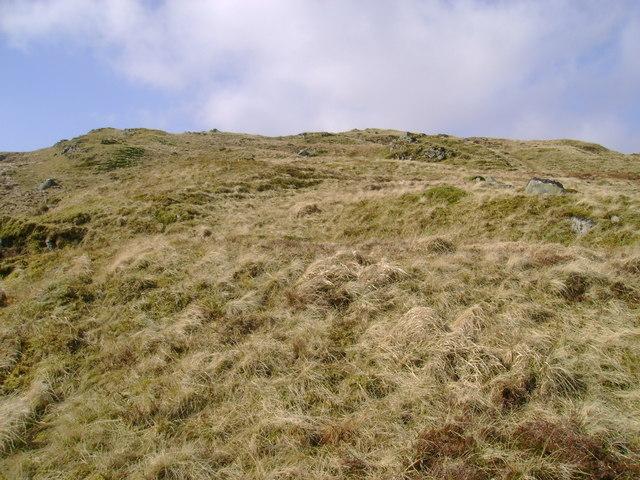 Rough grazing