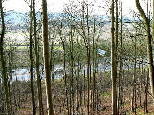 Motorway through trees