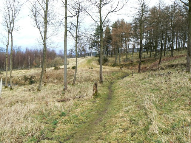 Westernmost part of the Moncreiffe woodland walk