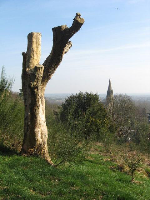 Tree stump and church spire
