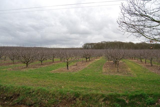 Orchard, Parsonage Farm