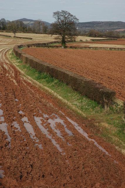 Farmland near Tillers' Green