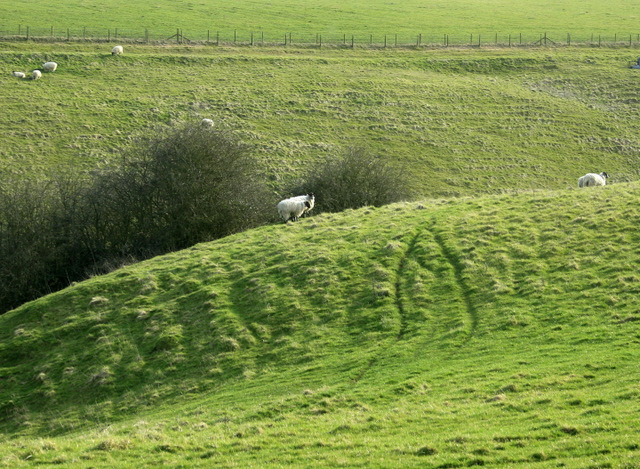 2009 : Sheep grazing in a dry valley