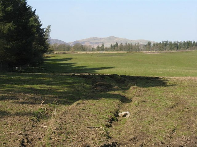 Fields and shelterbelt at Fallhills