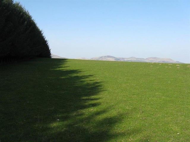 Shelterbelt shadow at Upper Firth