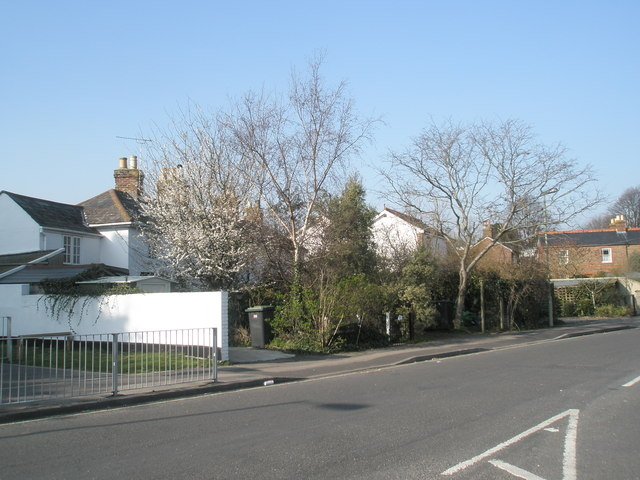 Early blossom in Solent Road