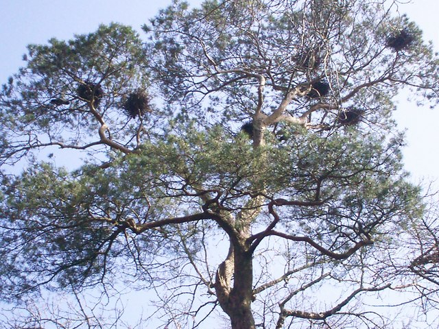 Crows' Nests at Heatherland, Llanteg