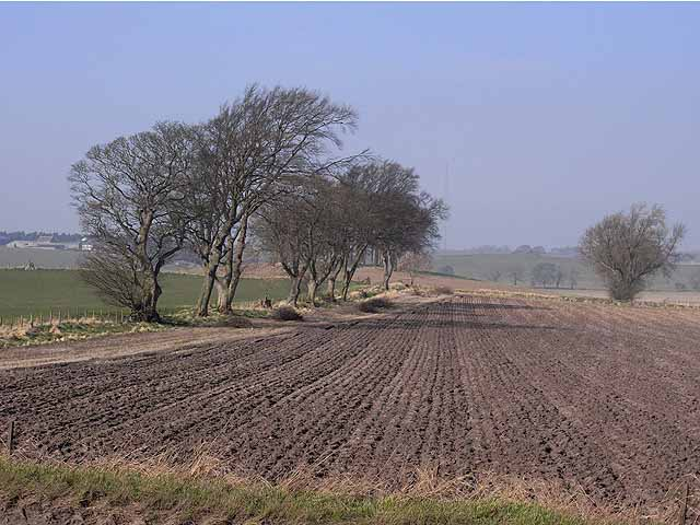 Ploughed field near Halton Red House Farm