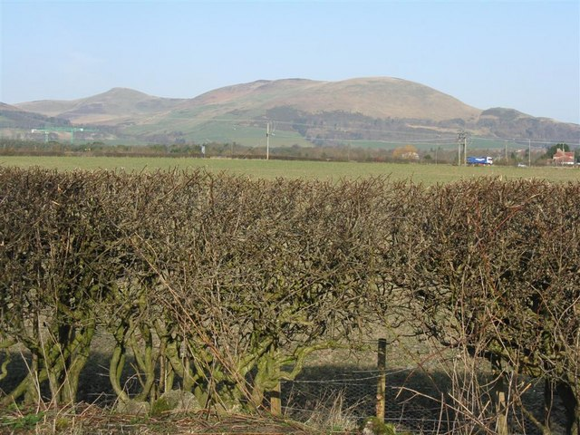 Hedges and Hills near Roslin