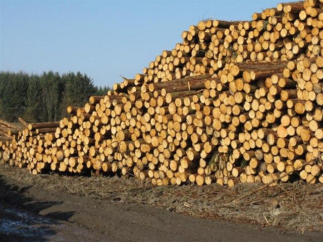 Forest harvest awaiting transport