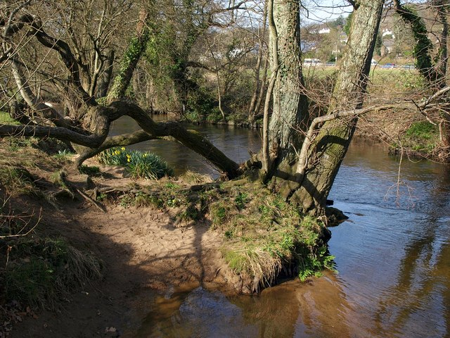River Bovey in Mill Marsh Park