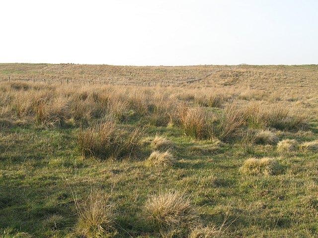 Rough grazing, Woodhead