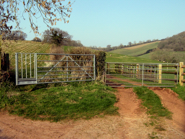Gates on the hill above Kingston St Mary