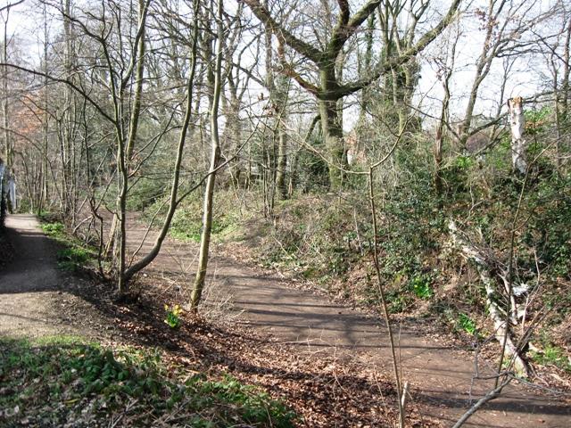 Sherrardspark Wood – Entrance from Campus West Car Park
