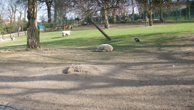 Sheep in Maryon Wilson Park