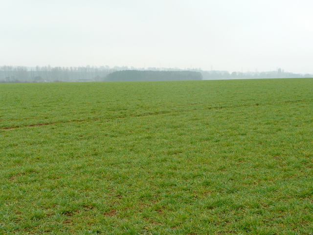 Lincolnshire cereal field