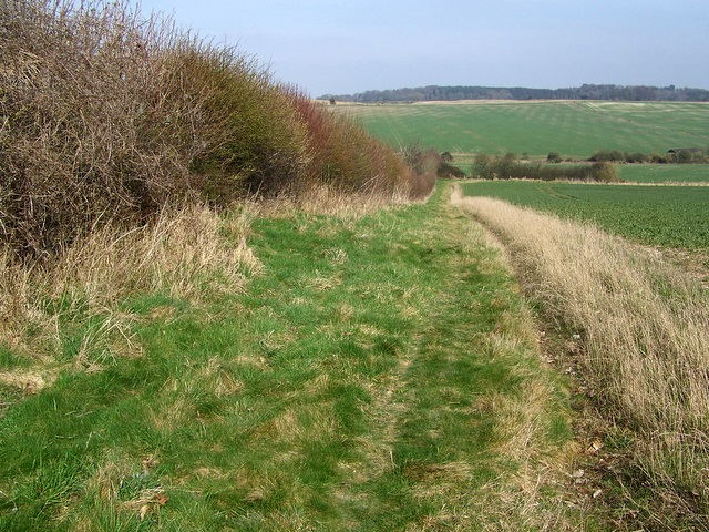 Footpath, Blackbush Down