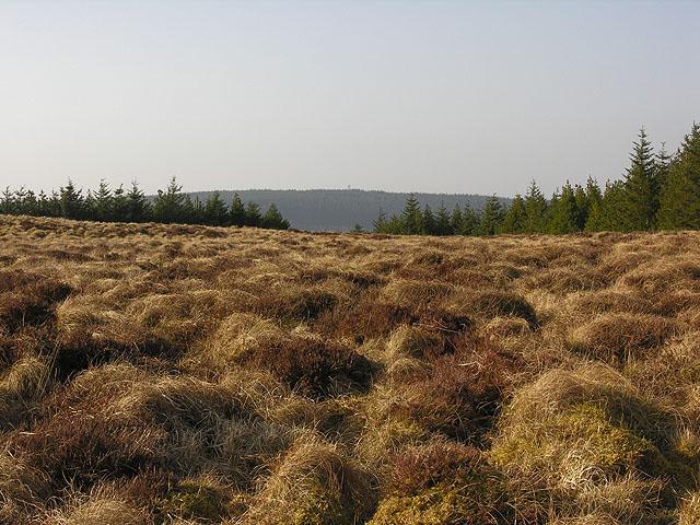 Cistfaen's summit plateau