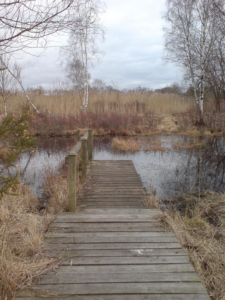 Jetty, Ancells Farm Nature Reserve